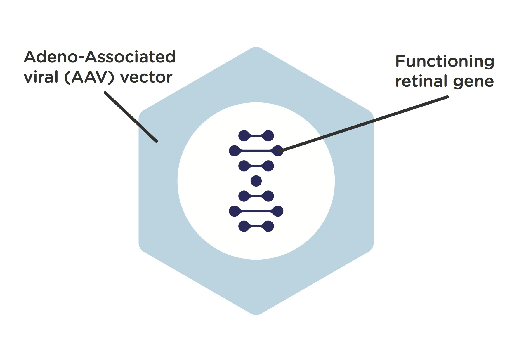 Marvellous adeno associated virus vectors for gene therapy photographs