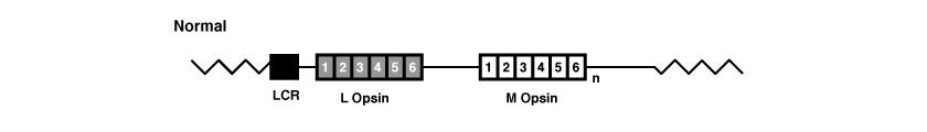 Opsin Gene Array - Exons
